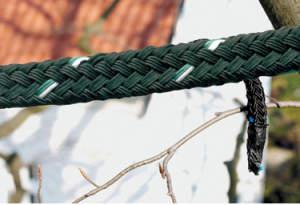 Tree Guardian - cavo
